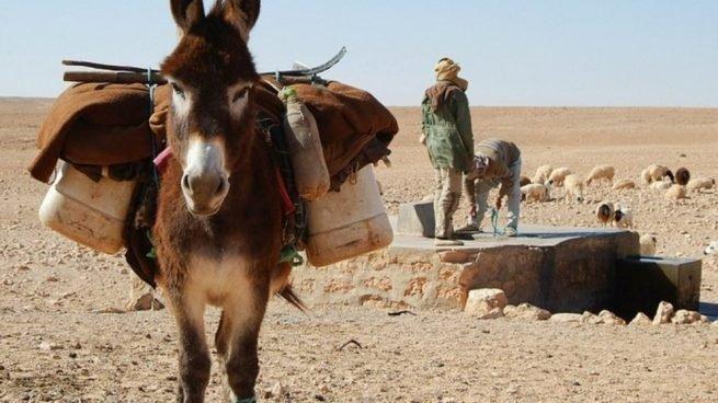burros-655x368